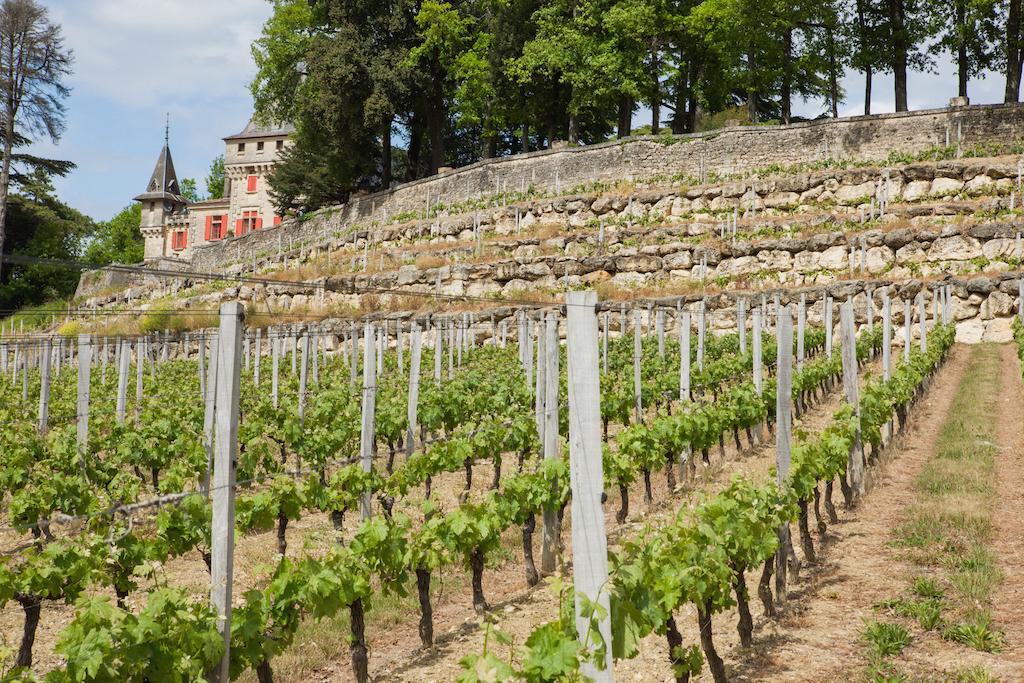 conseiller expert viticole